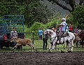 Rodeo Event Calf Roping 44.jpg