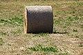 Rolo de herba - Rollo de hierba - Round hay bale - 02.jpg