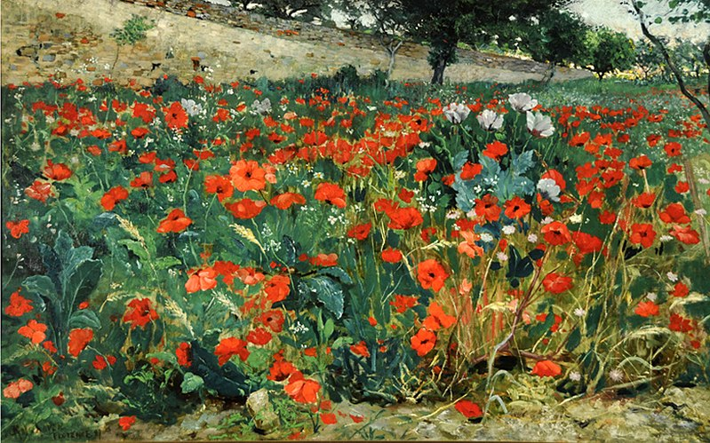 File:Rolshoven field-of-poppies.jpg