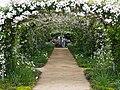 Rose, Paul's Himalayan Musk Rambler, バラ, ポールズ ヒマラヤン ムスク ランブラー, (23417113113).jpg