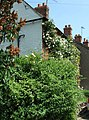 Rose-covered cottage - geograph.org.uk - 189247.jpg