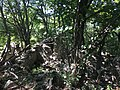 Rovine Monti Corno.jpg