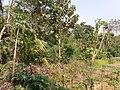 Ruined Nilkuthi at Manirampur in Hooghly 01.jpg