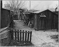 Sacramento, California. A typical dwelling in Louis' Camp - NARA - 521730.tif