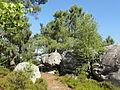 Saint-Pierre-lès-Nemours (77), le Mont Sarrasin par le GR 13, sens est-ouest 22.JPG