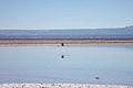 Salar de Atacama, Chile..jpg