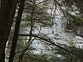 Salt Springs State Park (3284697810).jpg