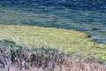 Salt marsh in Shoreline Park, Mountain View California IMG 2400.jpg
