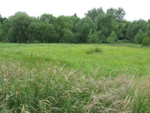 Saltersford Marsh