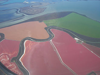 Haloarchaea - Salt ponds with pink colored Haloarchaea