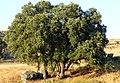 Santa Ana, Los Riscales 5.jpg