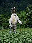 Scarecrow IMG 8740.jpg