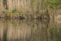 Schlitz Eisenberg NR 165214 Rohrwiesenbachtal und Eisenberg Pond Dam 05 SO.png