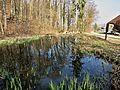Schlossbreiti Waldweiher.JPG