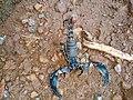 Scorpion (9).jpg