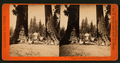 Section of the Big Tree, 30 feet in diameter, and House over the Stump, from the Sentinels, by Lawrence & Houseworth 2.png