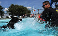 Security Forces conducts K-9 water training 130910-F-SY464-234.jpg