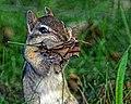 Seney National Wildlife Refuge - Wildlife (9705467384).jpg