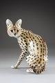 Serval katt - Hallwylska museet - 87169.tif