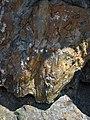Shatterconed sandstone (Mississagi Formation, Paleoproterozoic, ~2.3-2.4 Ga; Ramsey Lake Road outcrop, Sudbury, Ontario, Canada) 112 (47768105231).jpg