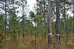 Shaw boosts neighboring endangered species population 151106-F-OG534-001.jpg
