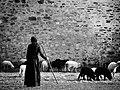 Shepherd Of The Monastery (62420951).jpeg
