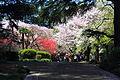 Shinjuku Gyoen National Garden - sakura 6.JPG