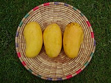 Sindhri mangoes is among top 10 mango varieties in the world