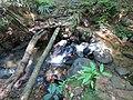 Sinharaja Forest stream.JPG