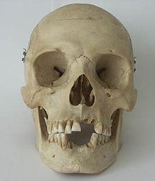 skull wiktionary