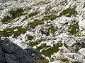 Slovenia 2012- climbing the Triglav (8023025785).jpg