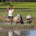 Smiling girl giving double V-sign while planting rice with grandmother.jpg