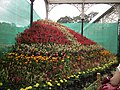 Snap from Lalbagh Flower Show Aug 2013 8250.JPG