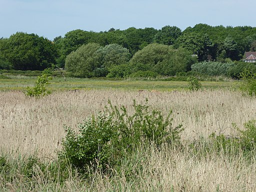 Snape Marshes 5
