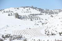 Snow 0466.JPG