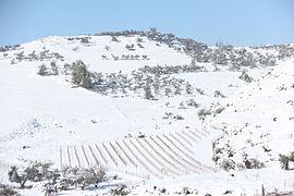 Snow 0466