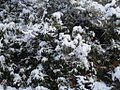 Snow falls 123.JPG