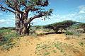 SomaliaNaheKismayo1993.jpg