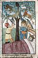 Songe Nabuchodonosor arbre.jpg