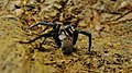 Spider (169384519).jpeg
