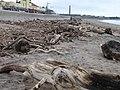 Spittal Beach - geograph.org.uk - 139246.jpg