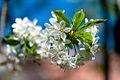 Spring (5606839806).jpg