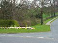 Spring flowers on the road to Mainsforth - geograph.org.uk - 155914.jpg