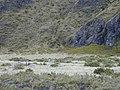 Starr-021003-0059-Vaccinium reticulatum-habitat-Old Waikau trail HNP-Maui (24257292040).jpg