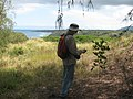 Starr-130320-1876-Cupaniopsis anacardioides-sapling with Forest gpsing-Nihoku Kilauea Pt NWR-Kauai (24582082483).jpg