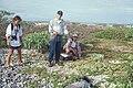 Starr 990412-0471 Solanum nelsonii.jpg
