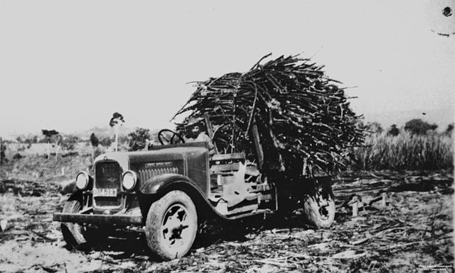 File Statelibqld 2 126971 Transporting Sugar Cane On The