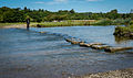 Stepping stones at Castell Ogwr in Afon Ogwr.jpg