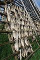 Stockfisch-Hovden-5.jpg
