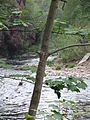 Stockport, Portwood, River Goyt 6480.JPG